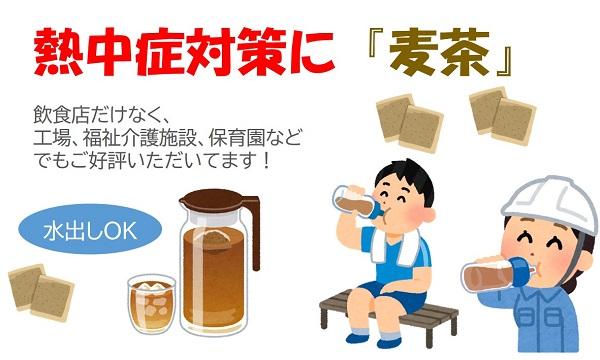 国内産六条麦茶(ティーバッグ)1000ティーバッグ,熱中症対策